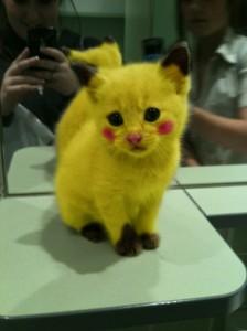 Chaton Pikachu